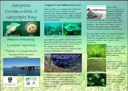 seagrass communities brochure